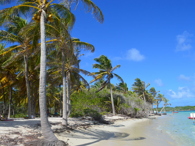 Dominica und Guadeloupe