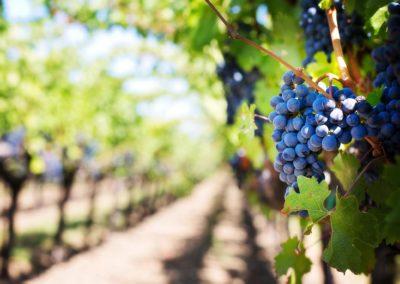Insel Reichenau – Wein- und Fischerfest